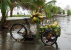 Тележка с кокосами :-)