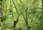 Буйство парковой зелени