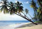 местные жители острова Барбадос