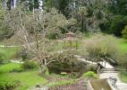 Японские сады Тулли